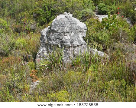 HUGE BOULDER AND INDIGENOUS VEGETATION FOUND ON TOP OF TABLE MOUNTAIN NATIONAL PARK