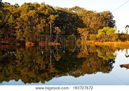 The Pound Lake And   Tree Reflection In Water