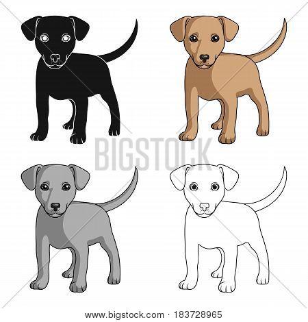 Puppy labrador.Animals single icon in cartoon style vector symbol stock illustration .