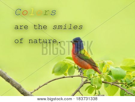 Colors are the smiles of nature - quote with a male Painted Bunting in his amazingly colored plumage