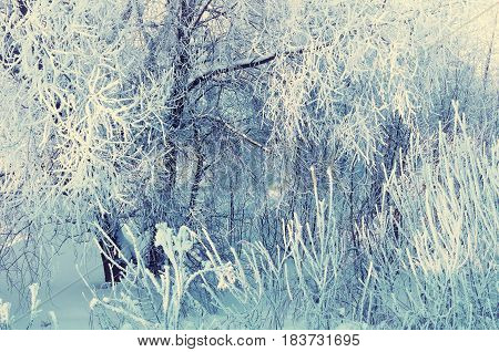 Winter landscape of frosty winter tree branches in winter forest in cold sunny weather. Vintage tones applied. Nature winter background -closeup of winter frosty trees in snowy winter forest. Winter landscape