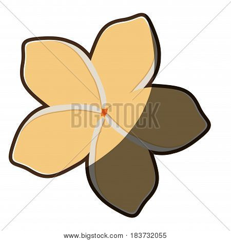 colorful silhouette shading of chinese rose with oval shaped petals vector illustration