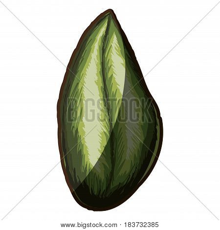 colorful silhouette shading of green leaf with oval form vector illustration