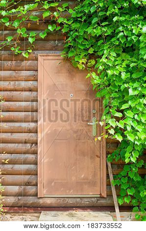 Nature background of grape leaves framing the wooden brown door. Bright green grape leaves in the garden. Fresh leaves of grape above the wooden door in the garden- closeup view