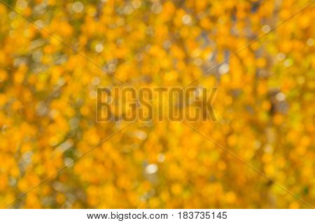 Blurred autumn background of yellowed autumn leaves in sunny weather. Defocused autumn leaves - autumn natural blurred background. Autumn blur