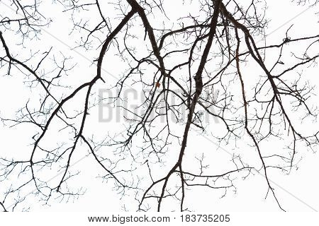 Tree Branches In Sky
