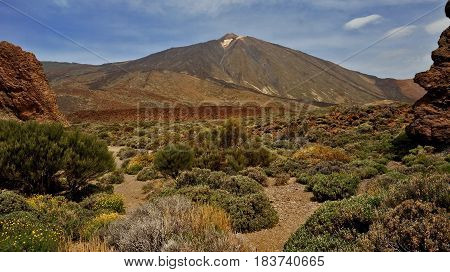 Mountain landscape. Blue sky with clouds. Volcano Teide on Tenerife. Small desert bushes with bare branches or green leaves. Yellow sand.