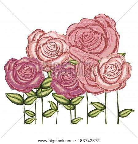 watercolor silhouette with set of roses flowers with stem and leaves vector illustration