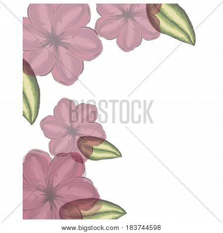 colorful floral frame with red malva flowers in transparency vector illustration