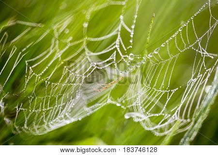 Spider web with dewdrops on the morning