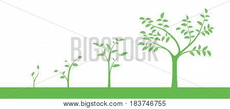 Vector illustration of a set of green icons - plant or tree growth phase isolated on white background