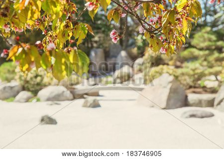 Japanese garden and sakura. Branches of a blossoming cherry on a background of a contemplative garden of stones in Japanese style. Copy space for your text