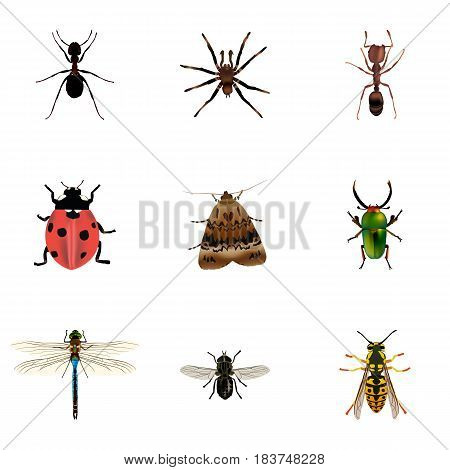 Realistic Midge, Insect, Damselfly And Other Vector Elements. Set Of Animal Realistic Symbols Also Includes Dragonfly, Ladybird, Ladybug Objects.