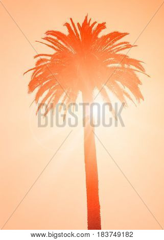 Silhouette Of The Tropical Palm Tree