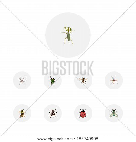 Realistic Housefly, Grasshopper, Tarantula And Other Vector Elements. Set Of Hexapod Realistic Symbols Also Includes Wasp, Spider, Mantis Objects.