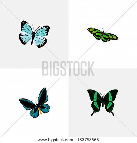 Realistic Lexias, Demophoon, Beauty Fly And Other Vector Elements. Set Of Beauty Realistic Symbols Also Includes Blue, Fly, Butterfly Objects.