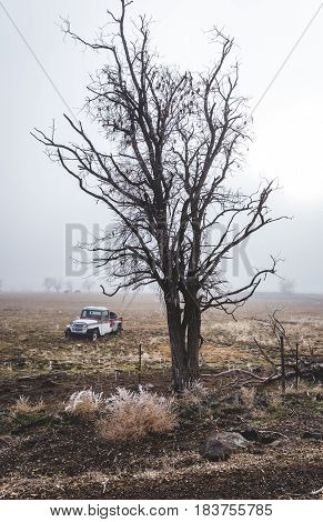 Foggy winter landscape with tall tree and antique vehicle on farm land in rural countryside. Shoshone Idaho USA in winter.