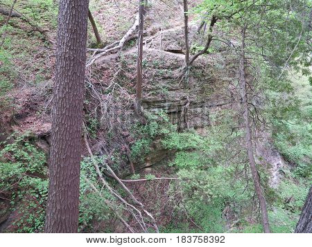 Sac Canyon in Starved Rock State Park showing new tree spring growth