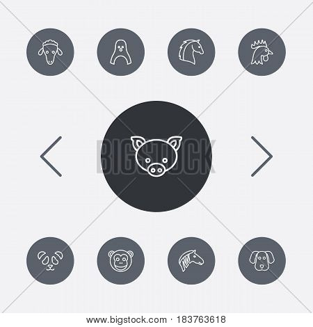 Set Of 9 Beast Outline Icons Set.Collection Of Feline Bear, Dog, Pig And Other Elements.