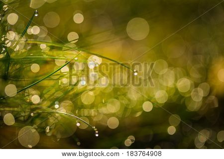 Close Up Of Wet Grass In Morning Light