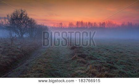 Dreamy Foggy Meadow Landscape