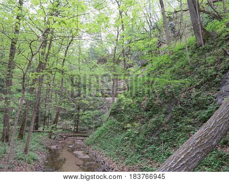 Spring at St. Louis Canyon in Starved Rock State Park with beautiful green trees