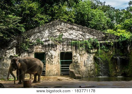 elephant's cage with little waterfall and pond photo taken in Ragunan zoo Jakarta Indonesia java