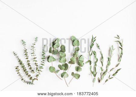 Dried eucalyptus. Various eucalyptus branches on white background. Flat lay top view