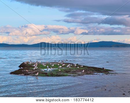 Seagulls on a small island during sunset