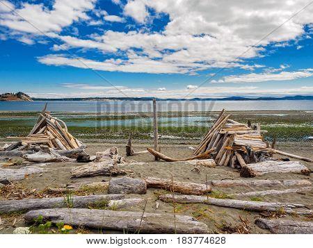 Driftwood strewn on the sandy ocean beach