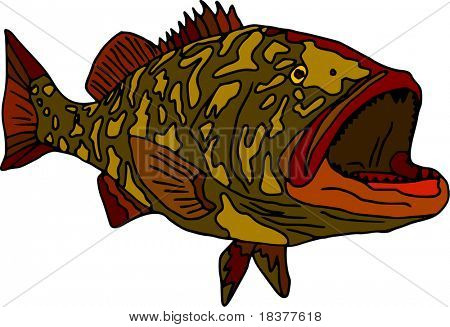 vector - fish gag grouper isolated on white background