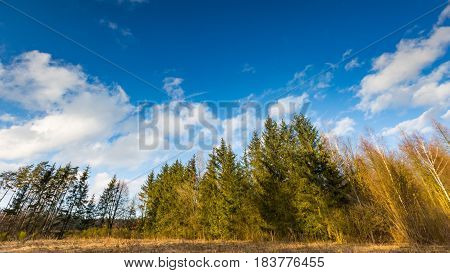 Early Spring Landscape With Sky Over Forest