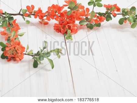 the red flowers on white wooden background