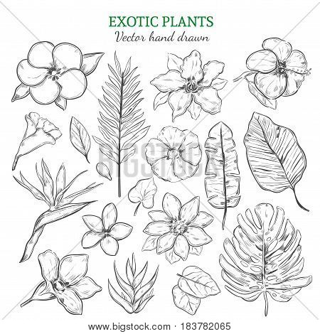 Hand drawn exotic plants set with natural tropical flowers and leaves in monochrome style isolated vector illustration