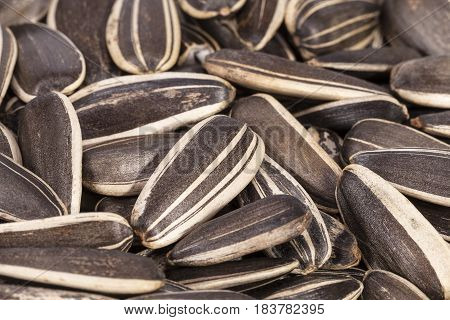 Background of dried sunflower seeds close up.