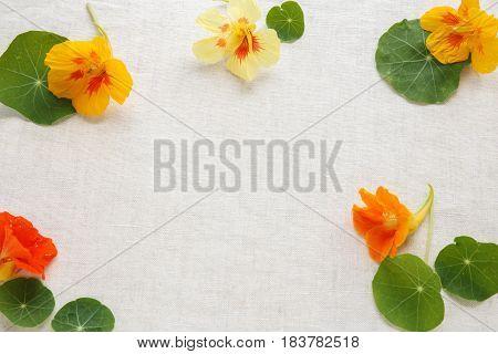 orange edible flowers nasturtium summer spring copy space background