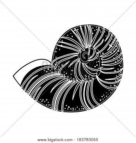 Conch marine animal icon vector illustration graphic design