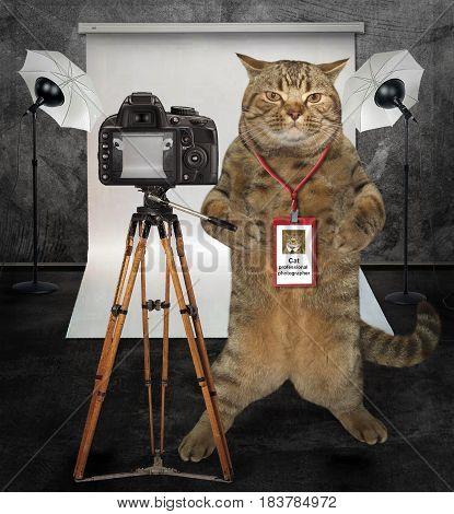 The cat photographer is in his photo studio.