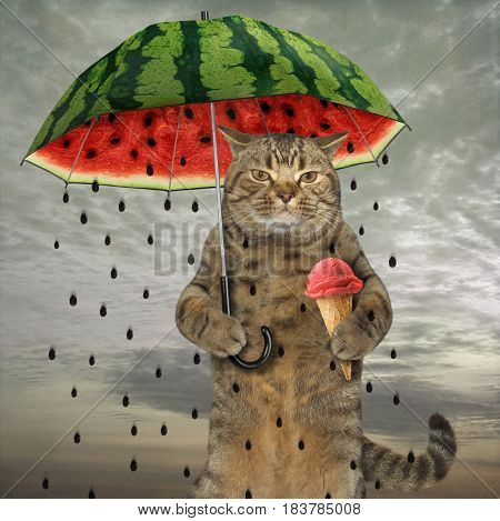 The cute cat is holding an umbrella in one paw and fruit ice cream in other.