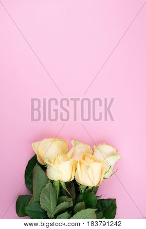 Bouquet Of Beige Roses On Pink Background, Flat Lay, Top View, Copy Space. Mothers Day. Valentines D