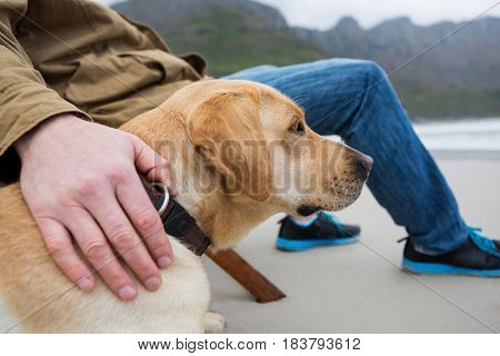 Close-up of mans hand papering dog at the beach