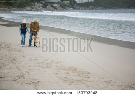 Couple walking with pet dog at the beach