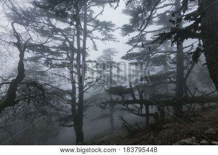 Magic misty forest