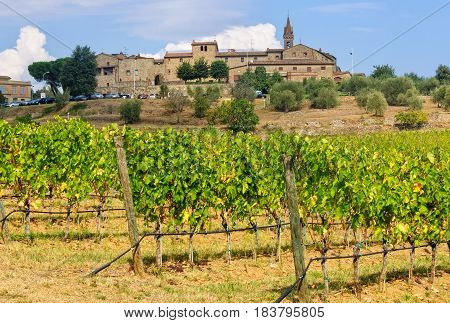 Vineyard under the medieval hilltop village of San Gusmè in Chianti, Tuscany, Italy