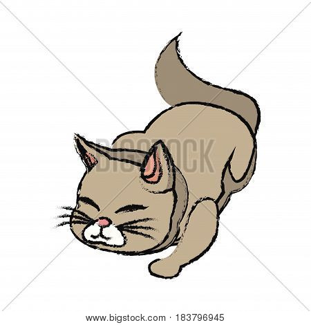 cat animal pet adorable desing vector illustration