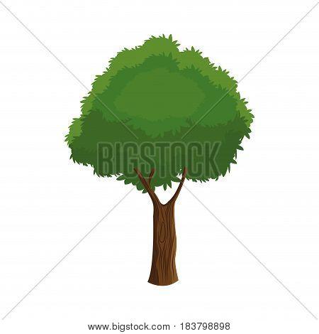 tree plant organic foliage over white background vector illustration