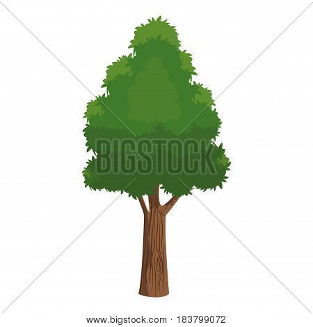 tree foliage leafy natural over white background vector illustration