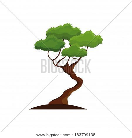 bonsay tree oriental season nature branch vector illustration