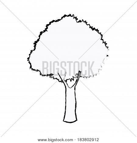 oak tree foliage ecosystem plant sketch vector illustration