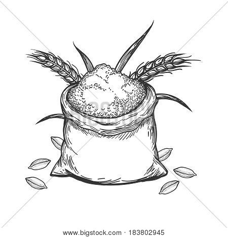 Hand sketched whole bag of wheat flour and grains isolated on white background. Vector illustration